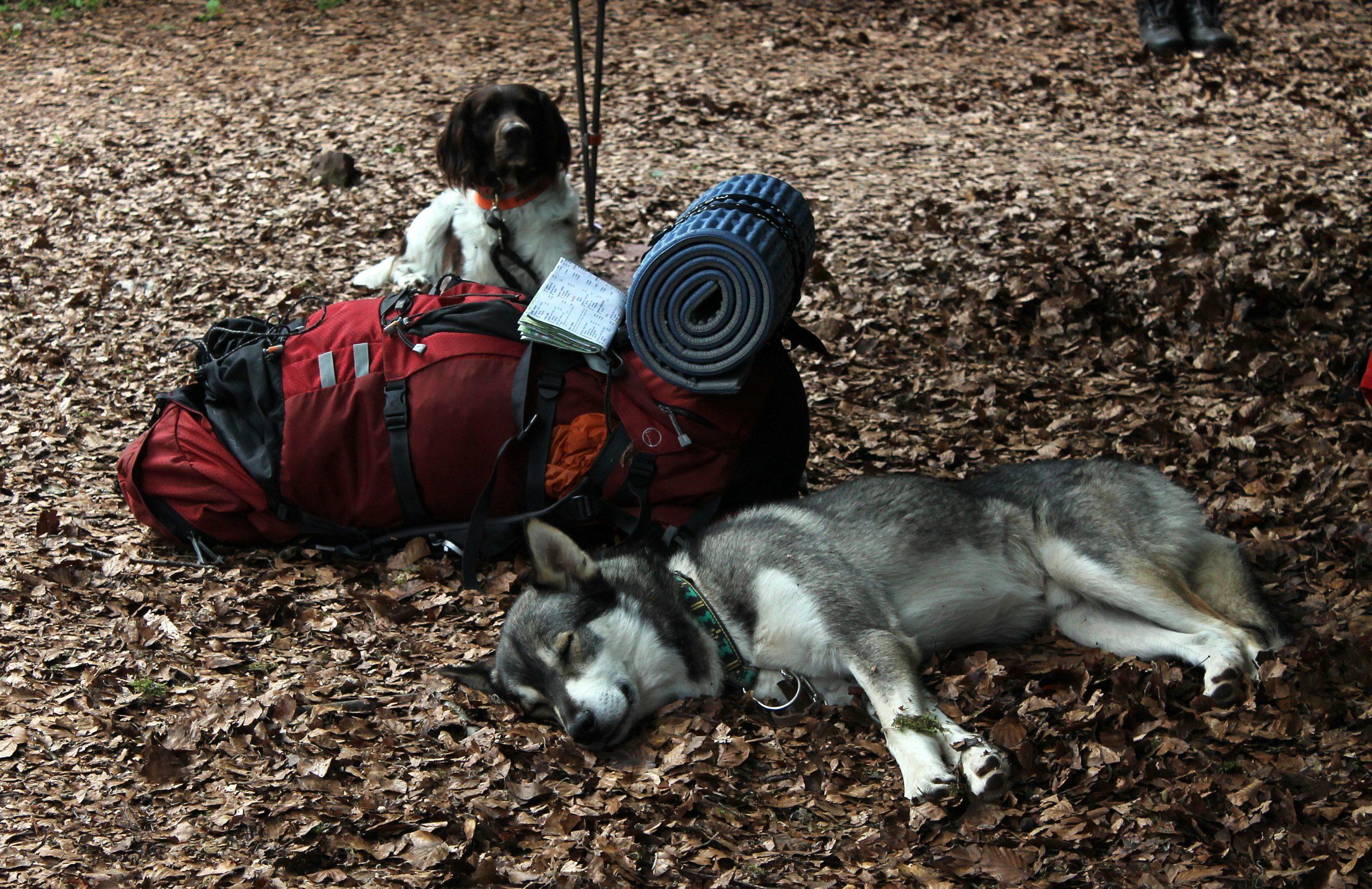 Dog-Trekking-scaled.jpg