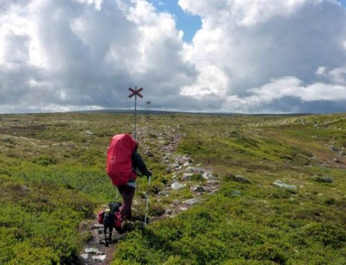 Trekking im Norden – Fjällwandern