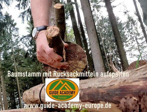 Baumstamm mit Messer und Klopfholz aufspalten